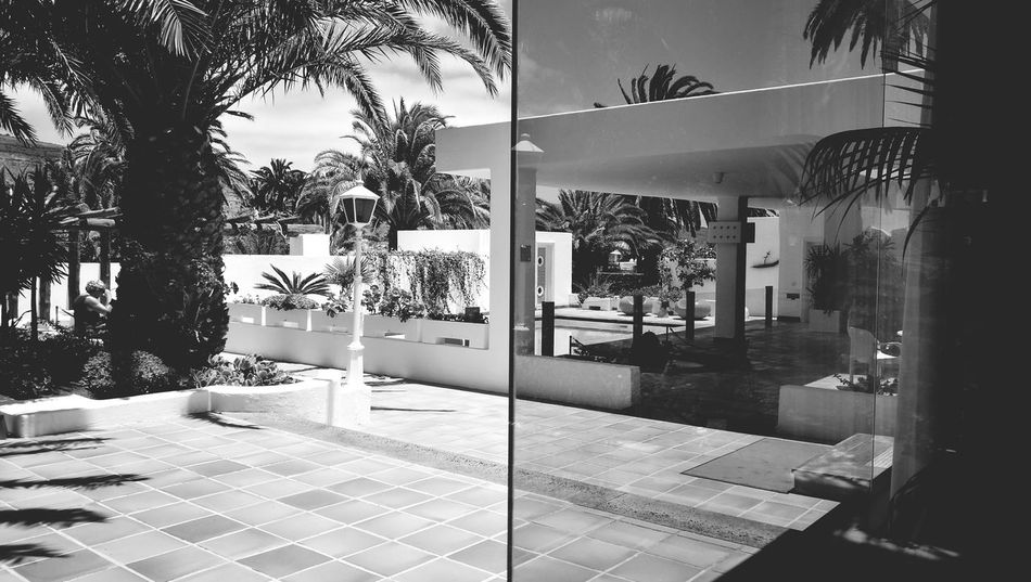 Luxury Tree No People Palm Tree Architecture Outdoors Day Water Swimming Pool Sky Design Hot Day Window View Chillout Day Summertime Modern Architecture Black & White