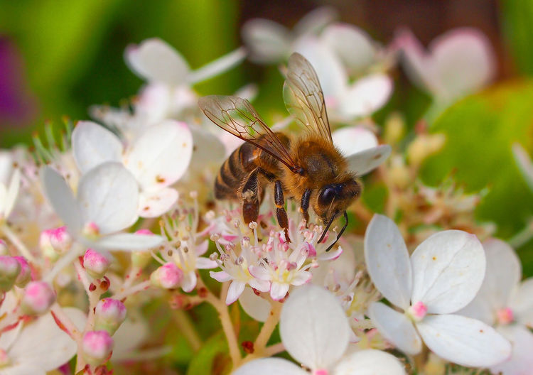 the bee Bee Pink Color No People Flower Head Close-up Beauty In Nature Animal Wildlife Animals In The Wild One Animal Animal Themes Insect Flower Honey Bee EyeEm Nature Lover Naturephotography