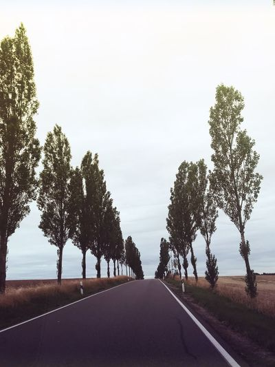 Empty road by trees against clear sky