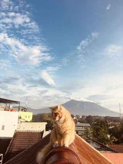 Portrait of a cat sitting on mountain against sky