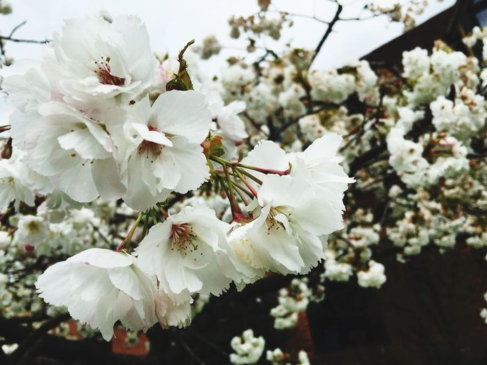New Places Devere Hotel Blossom White Flower Pink Spring Tree Wedding Wedding Photography Natures Confetti