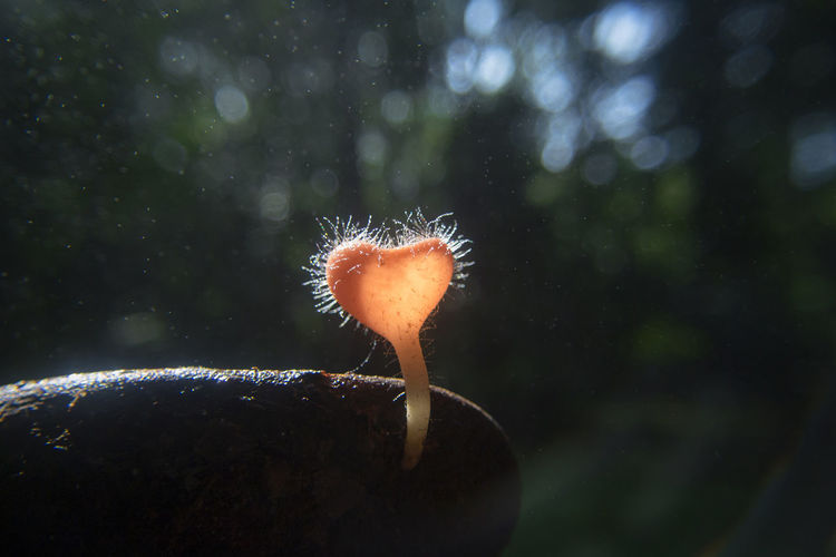 Close-Up Of Heart Shape Mushroom Growing In Forest