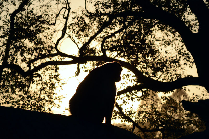 Silhouette of a