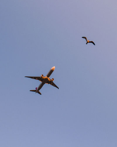 Low angle view of bird and airplane flying in sky