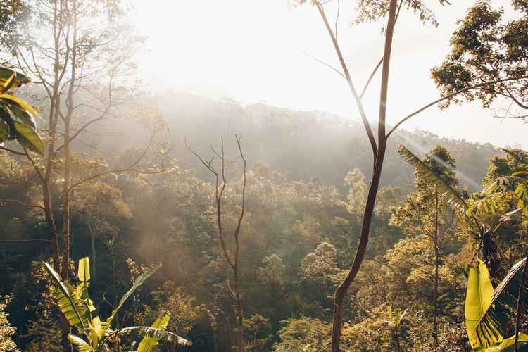 Beauty In Nature Branch Day Fog Forest Growth Mountain Nature No People Outdoors Plant Scenics Sky Tranquility Tree