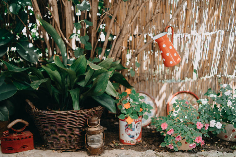 Art And Craft Basket Beauty In Nature Container Day Decoration Flower Flower Pot Flowering Plant Freshness Front Or Back Yard Gardening Green Color Growth Leaf Nature No People Outdoors Plant Plant Part Potted Plant Wicker
