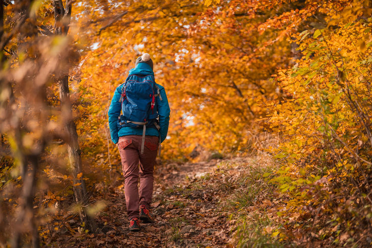 Rear view of backpack woman walking on footpath in forest during autumn