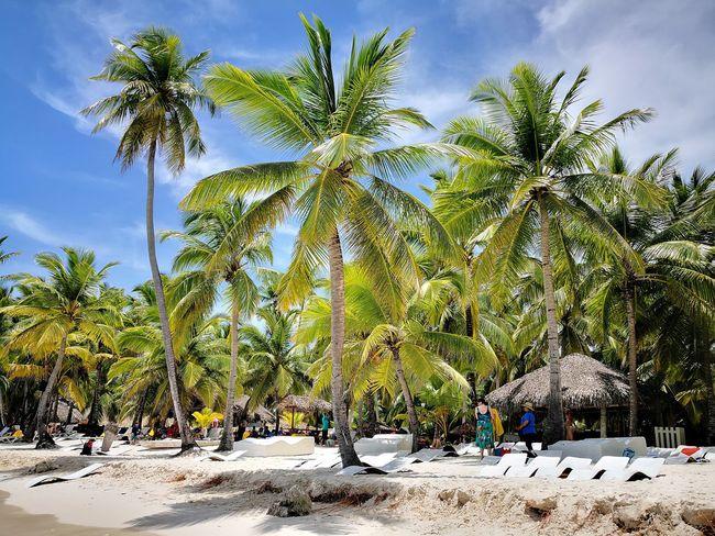 Coconut trees Tree Sand Beach Sunlight Sky Cloud - Sky Landscape