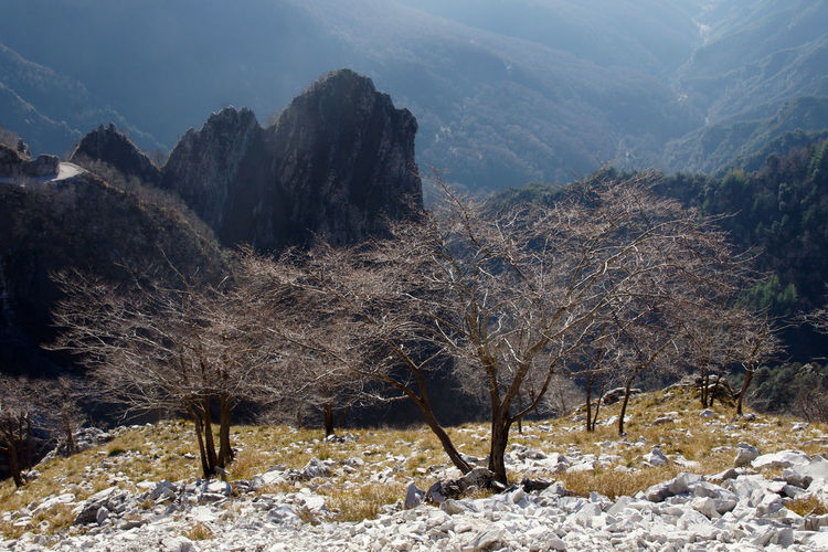 View of trees on mountain during winter