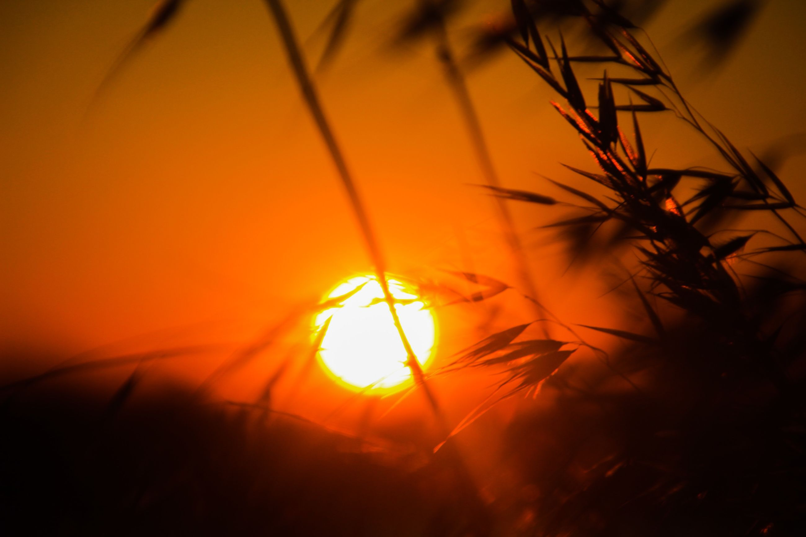 sunset, orange color, sun, silhouette, beauty in nature, nature, sunlight, plant, growth, tranquility, close-up, scenics, yellow, sky, outdoors, no people, idyllic, tranquil scene, back lit, field