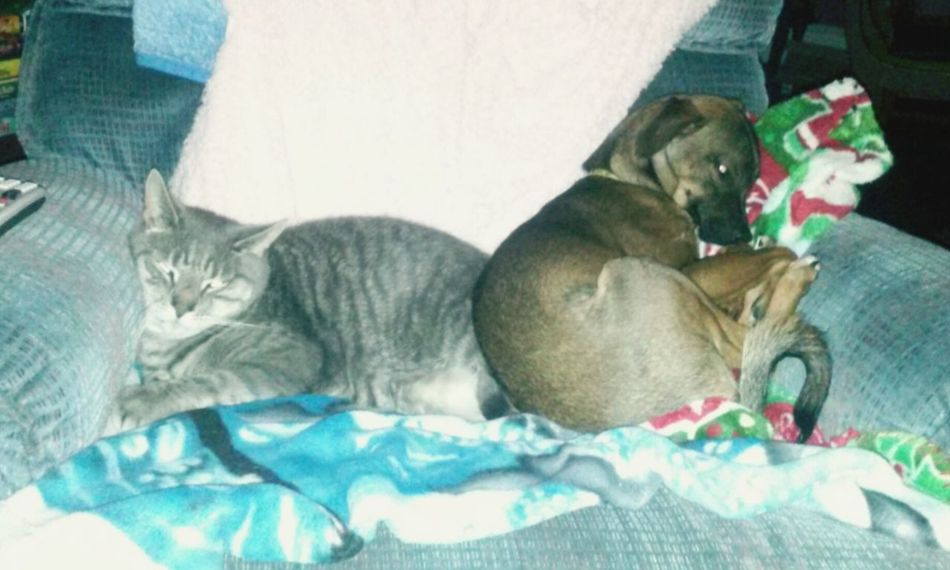 Radar loves Scooby ?❤?? Pets Puppy And Kitty Love
