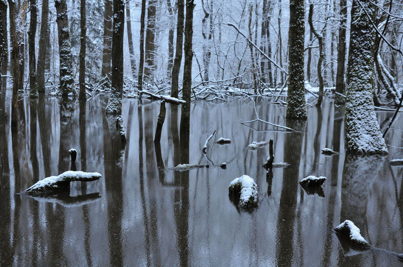 Patterns In Nature Peace Tree Water Reflections Winter Beauty In Nature Cold Temperature Frozen Meditative Spot Outdoors Silence Snow Fall Snowing Tranquility Trunks