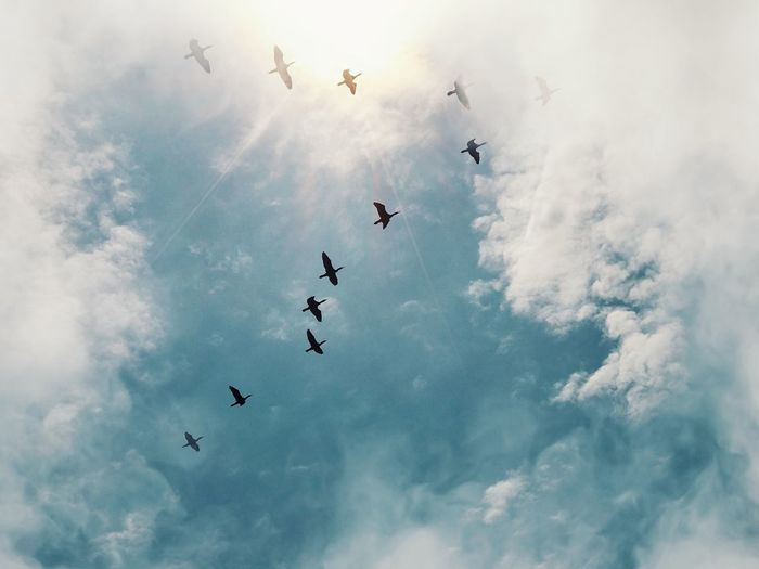 Birds in the sky Amazing View View From Below Clouds Sunflare EyeEm Selects Flying Cloud - Sky Sky Low Angle View Group Of Animals Vertebrate Animal Themes Bird Large Group Of Animals Mid-air Nature No People Motion Day