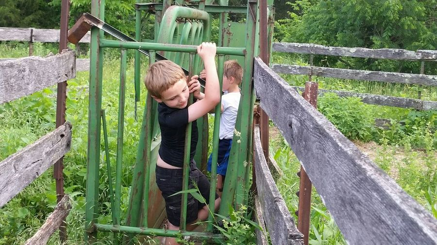 Boy holding metal fence with male friend amidst plants on field
