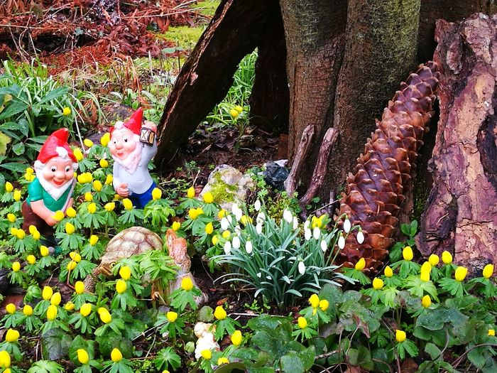 Garden Gnomes Gartenzwerg Zapfen Eye4photography  EyeEm Nature Lover EyeEmNewHere Springtime Outdoors Day Nature Growth Plant One Person People Freshness