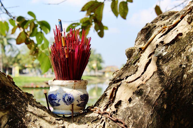Photo taken in Hoi An, Vietnam