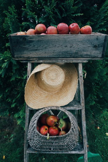 Apples in crate against plants
