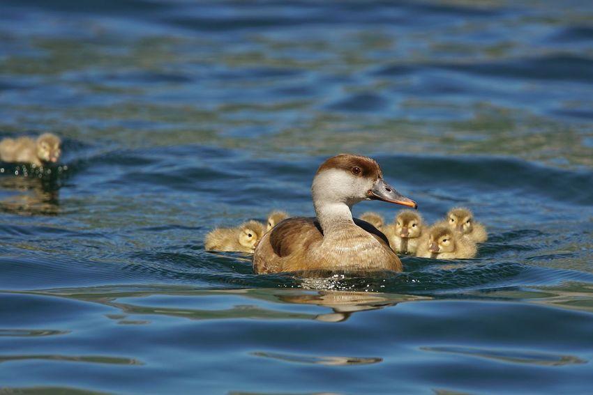 Lago Di Como, Italy Italy🇮🇹 Italy❤️ Sony A6000 Natura Tamron 150 600 Lago Di Garlate,italy Fiume Adda Fistione Turco