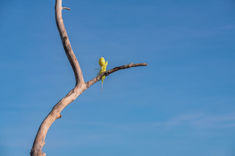 Low angle view of bird on branch against sky
