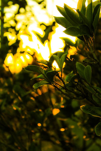 Beauty In Nature Green Color Nature Outdoors Plant