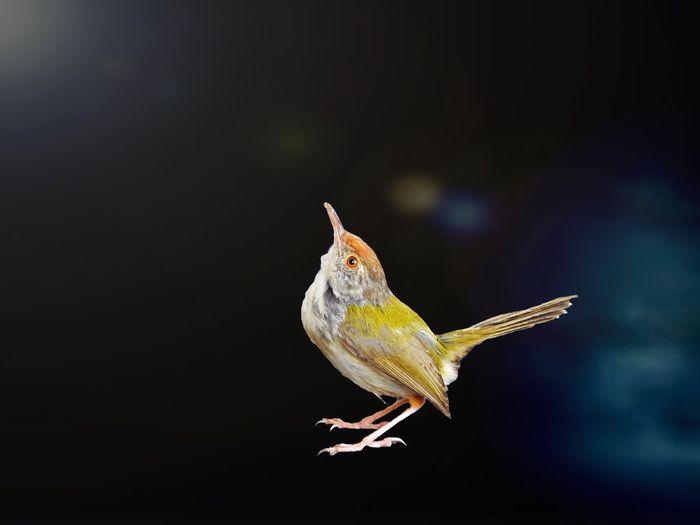 Tadaa Community EyeEm Nature Lover Birds Sunshine