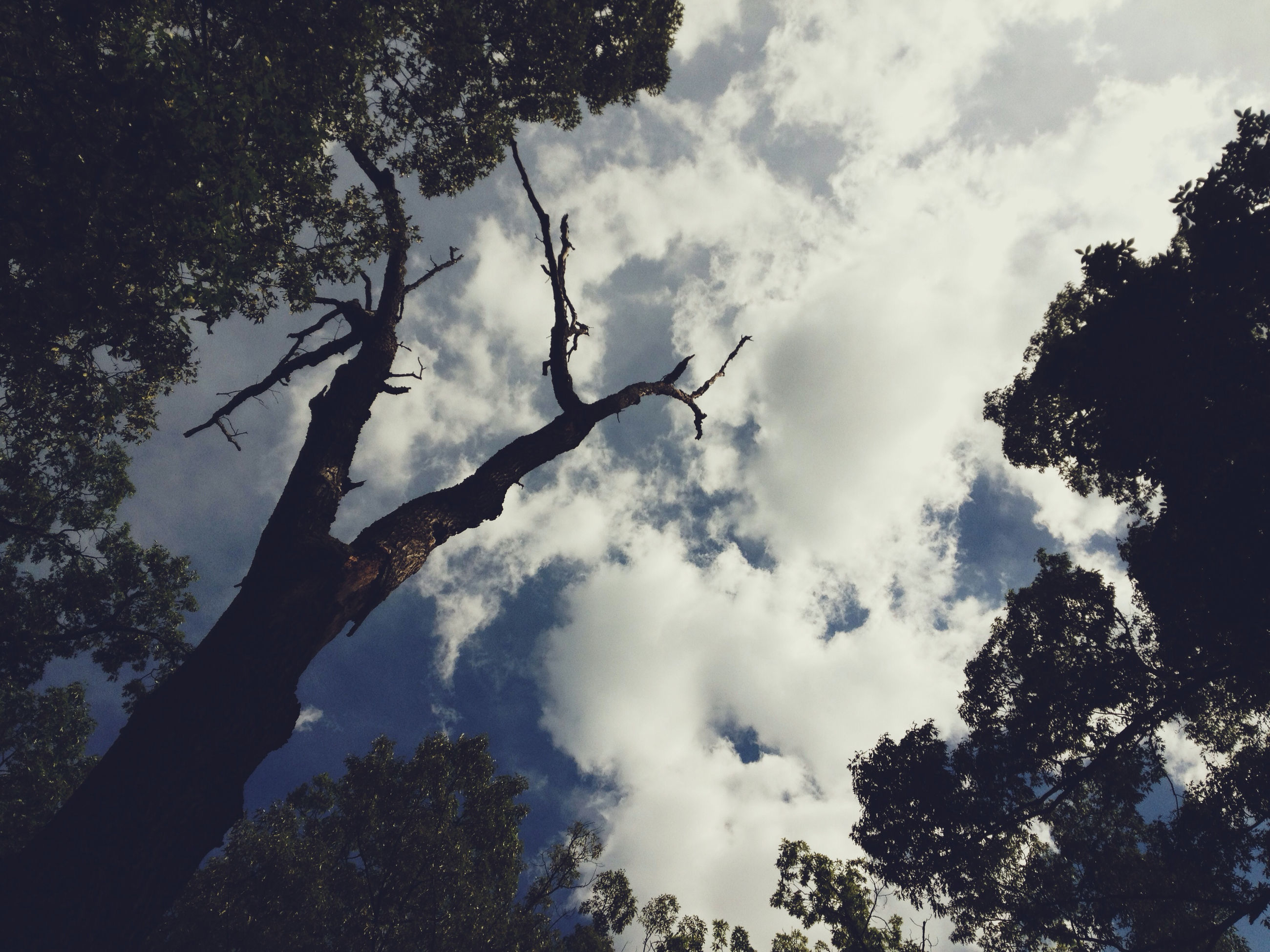 tree, low angle view, sky, cloud - sky, tranquility, branch, nature, silhouette, beauty in nature, growth, tranquil scene, scenics, cloudy, cloud, outdoors, no people, day, forest, high section, idyllic