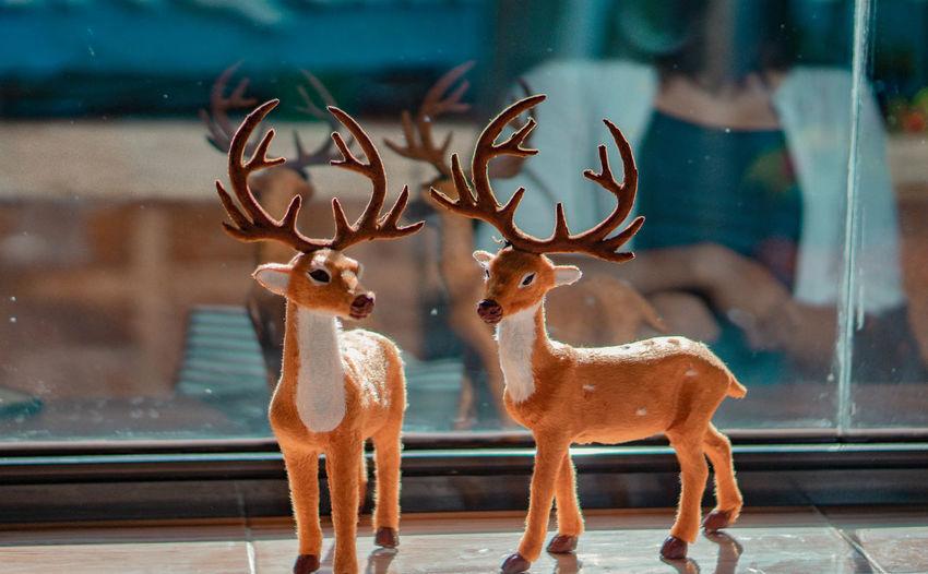 Deer seen through glass window