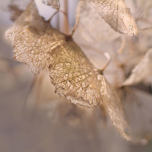 Close-up of leaves on twig