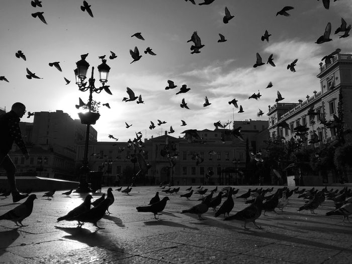 Athens in the morning Pigeons Life Greece Athens Street Life Streetphoto_bw Streetphotography Flying Birds Black And White Bnw_collection City Lights City Street Birds Of EyeEm  Pigeons Everywhere Vertebrate Bird Large Group Of Animals Architecture Animal Themes Group Of Animals Flying Animal Built Structure Sky Nature Flock Of Birds City Mid-air Sunlight Day Silhouette Adventures In The City #urbanana: The Urban Playground