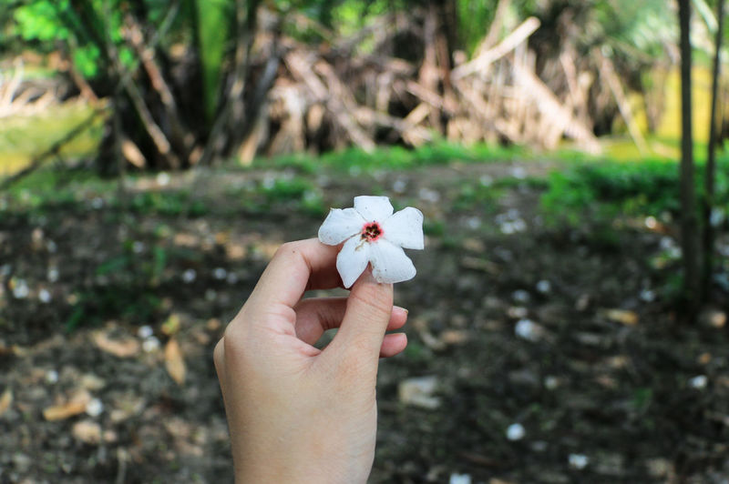 Close-up of woman hand holding flower on field