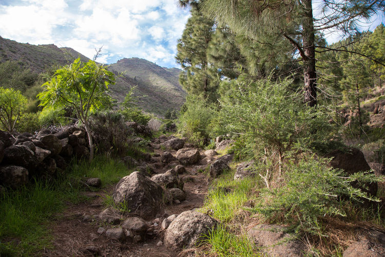 Way to Pico Verde, Tenerife Adventure Awesome_view Beauty In Nature Canon Day Hiking Landscape Loneliness Mountain Nature No People Outdoors Pico Verde Sky Tenerife Tenerife Island Teneriffa TheWeekOnEyeEM Tree Tree Area