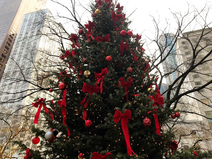 City Plant Tree Red Nature No People Day Holiday Moments Christmas Branch Decoration Christmas Decoration Outdoors