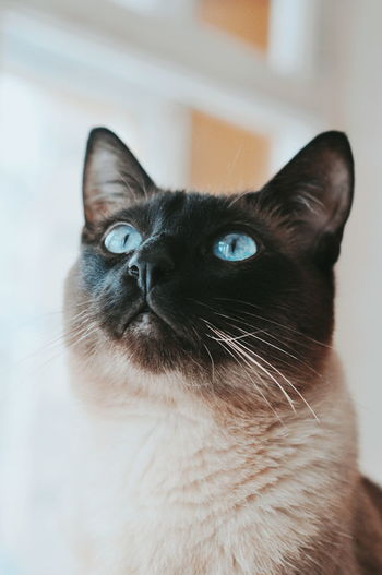 Cat Cats The Week on EyeEm Pets Domestic Cat Domestic Animals Portrait One Animal Looking At Camera Alertness Feline Animal Looking Animal Hair Animal Themes Nose Whisker Mammal No People Indoors  Close-up