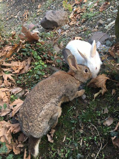 Doğa Tavşan