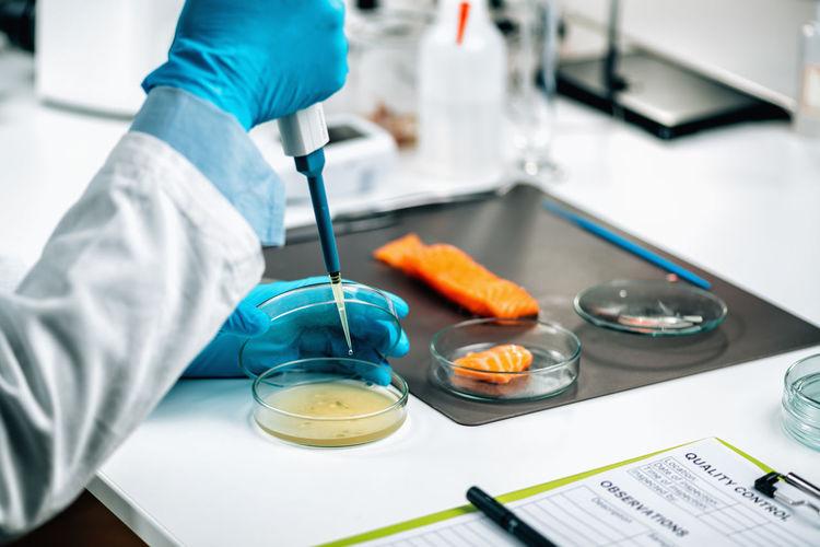 Food quality management - microbiologist testing salmon fish sample