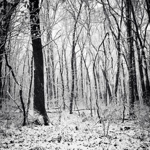 Snowy foggy morning.