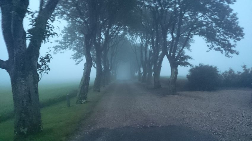 Foggy day in the road Bare Tree Beauty In Nature Country Road Countryside Diminishing Perspective Empty Foggy Grass Idyllic Landscape Nature No People Non-urban Scene Outdoors Remote Road Scenics Sky Spring Tranquil Scene Tranquility Tree Tree Trunk Treelined Vanishing Point
