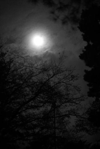 月 Moon Moonlight Lookup Night Sky Night Sky Black & White Black And White Monochrome Moment Of Silence Tranquility Tranquil Scene Sky And Clouds Sky And Trees Low Angle View Night Photography Low Angle View EyeEm Nature Lover From My Point Of View 月明かり 空を見上げる 静かな夜