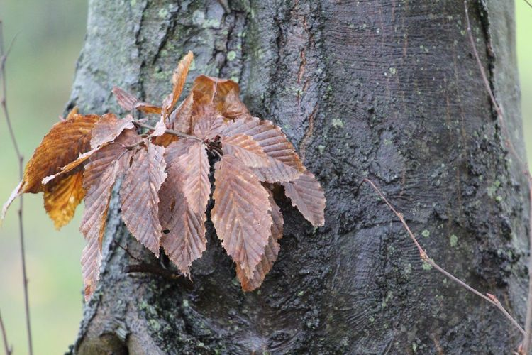Leaf Change Autumn Nature Tree Trunk Beauty In Nature Day Close-up Outdoors Fragility Butterfly - Insect No People Tree Animal Themes Herbst17 🦋 Autumn17 Beauty In Nature