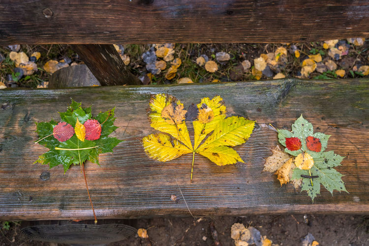 High angle view of maple leaves on wood