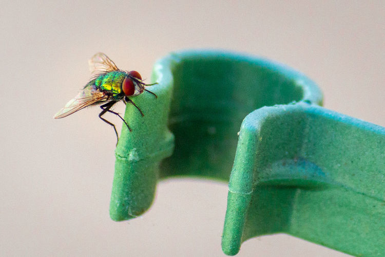 Close-Up View Of Housefly