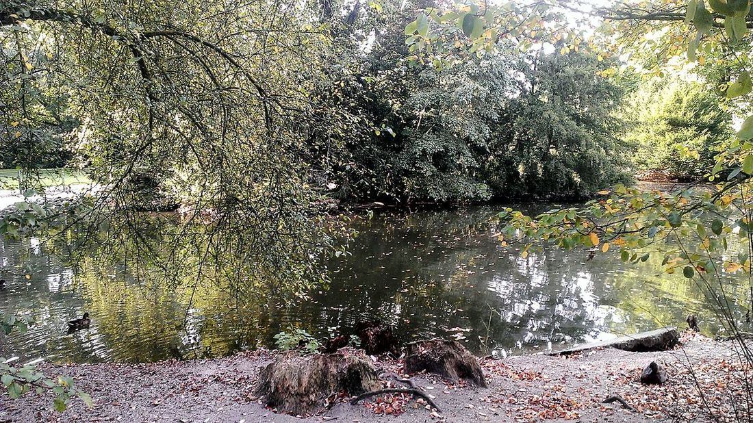 Nature Lover❤ Ententeich Non-urban Scene Nature In Color Life Is Beautiful Stadtpark♡