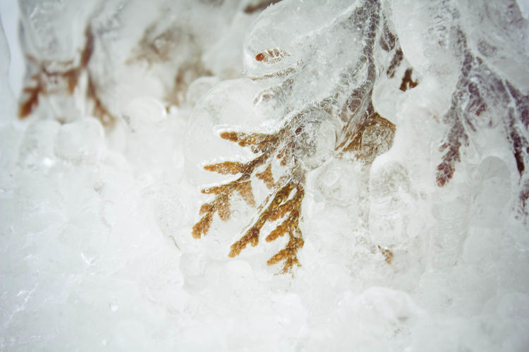 Backgrounds Beauty In Nature Close-up Cold Temperature Day Detail Frozen Frozen Nature Frozen Plants Full Frame Ice Ice Covered  Ice Encased Nature No People Outdoors Season  Tranquility Weather White