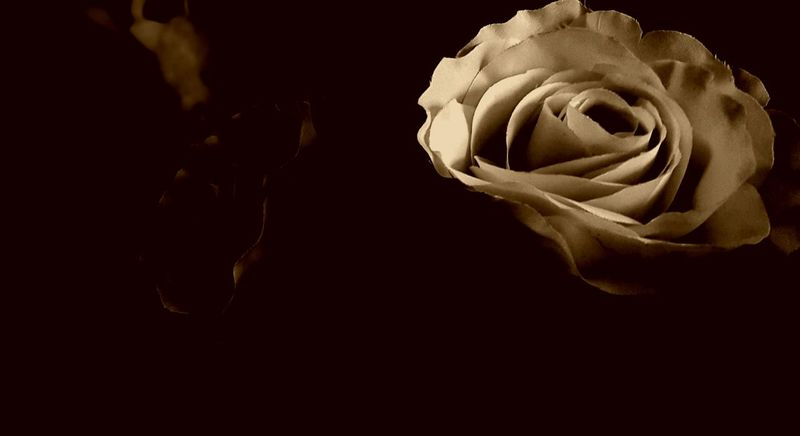 Night Rose - Flower Flower Head Night Black Background Freshness Fragility Beauty In Nature Drastic Edit As I See It Modern Art My Photos Adis Art Photo Art Tadaa Community Art Photography Creativity Fine Art Macro Showcase January Black And WhiteBerlin, Germany  Vintage Colors Abstract Adapted To The City Lieblingsteil Uniqueness The City Light Carnival Crowds And Details EyeEmNewHere Welcome To Black Long Goodbye EyeEm Diversity Resist The Secret Spaces Art Is Everywhere Break The Mold TCPM Cut And Paste The Architect - 2017 EyeEm Awards The Portraitist - 2017 EyeEm Awards The Photojournalist - 2017 EyeEm Awards The Photojournalist - 2017 EyeEm Awards Neighborhood Map The Street Photographer - 2017 EyeEm Awards The Great Outdoors - 2017 EyeEm Awards Visual Feast BYOPaper! Live For The Story Place Of Heart Sommergefühle EyeEm Selects Breathing Space The Week On EyeEm Investing In Quality Of Life Mix Yourself A Good Time Berlin Love Paint The Town Yellow Discover Berlin Been There. Lost In The Landscape Perspectives On Nature Postcode Postcards Be. Ready. Black And White Friday Step It Up One Step Forward Crafted Beauty AI Now Shades Of Winter Colour Your Horizn Stories From The City Inner Power
