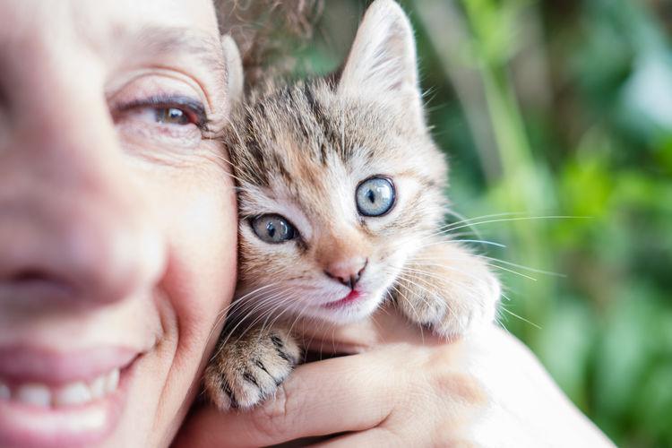 Close-Up Woman Holding Kitten
