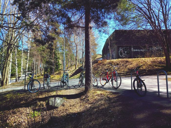 Spring Has Arrived Streetphotography Sweden Stockholm Spring Photography Bicycle Transportation Outdoors Nature