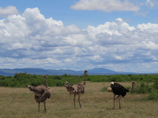 Nature Animal Themes Large Group Of Animals Animals In The Wild Beauty In Nature Safari Safari Animals Africa Kenya Gaming Kenya Wildlife
