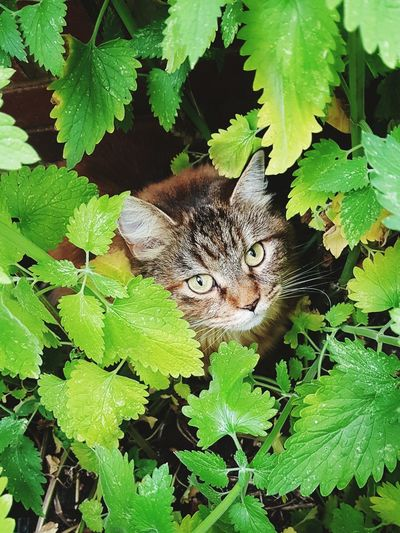 Cat♡ Green Color One Animal Animals In The Wild Animal Wildlife Outdoors Leaf Nature Animal Themes Close-up Camouflage Plant
