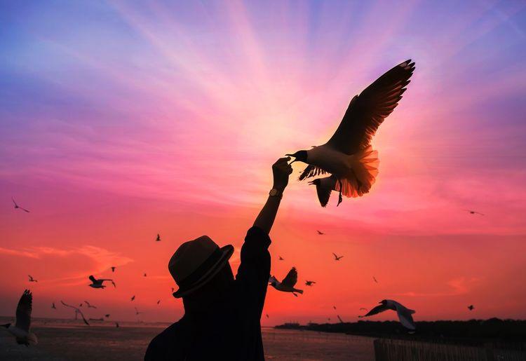 Silhouette bird flying against sky during sunset