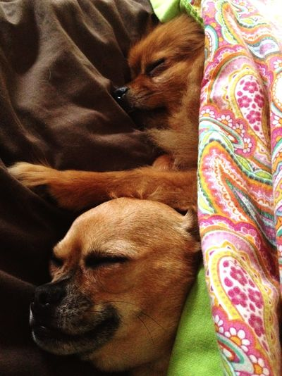 Bestfriends <3 Brothers! Furbabies MyLoves Cuddletime Passedout Bed Time ♥
